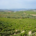 Wijngaard in de Douro