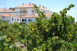 Wijngaard in Padilha (Almeirim)